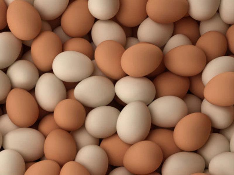 trứng còn vỏ