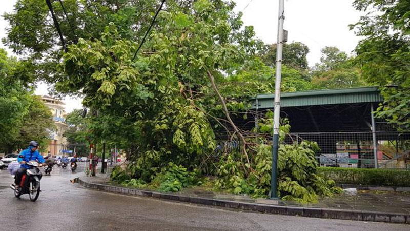 Hải Phòng ngổn ngang cây xanh gãy đổ sau khi bão quét qua